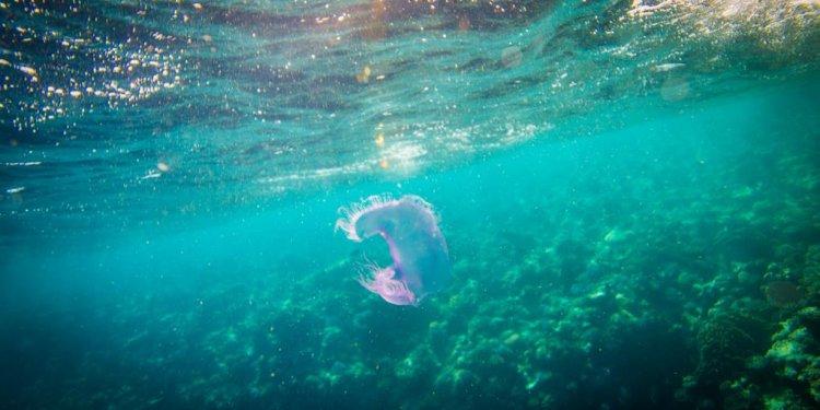 Marine Life Wonders; Jelly