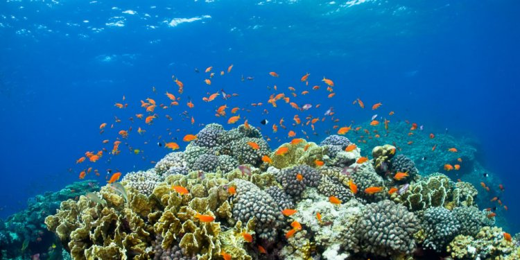 Picture of Northern Red Sea