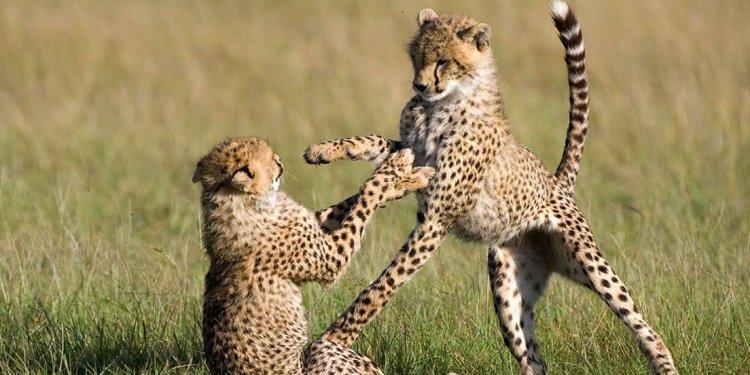 8 Days Kenya and Tanzania