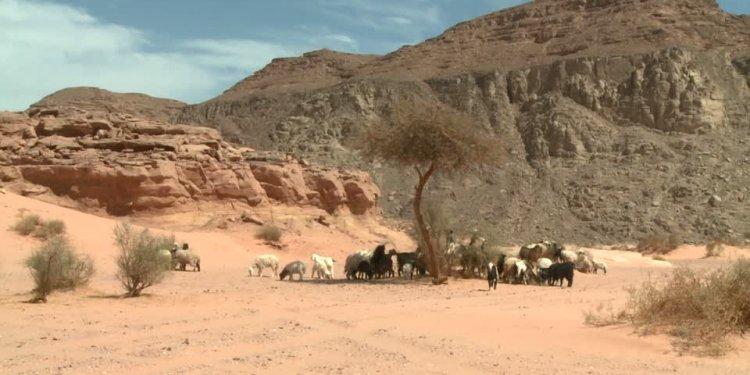 Nuweiba, Wadi Watir, Sinai