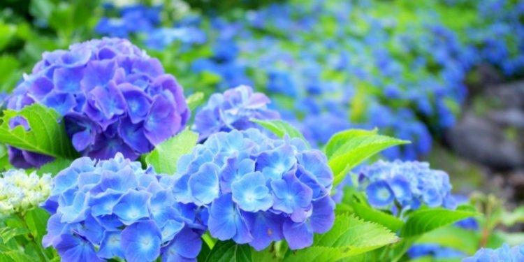 What is June like in Japan?