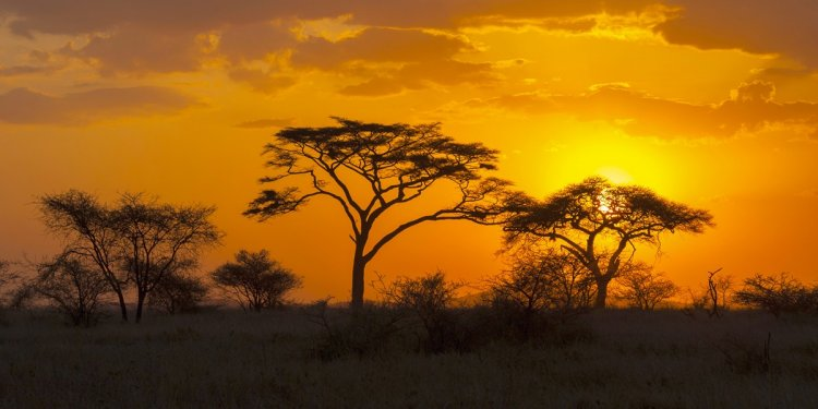 Africa Tours from USA