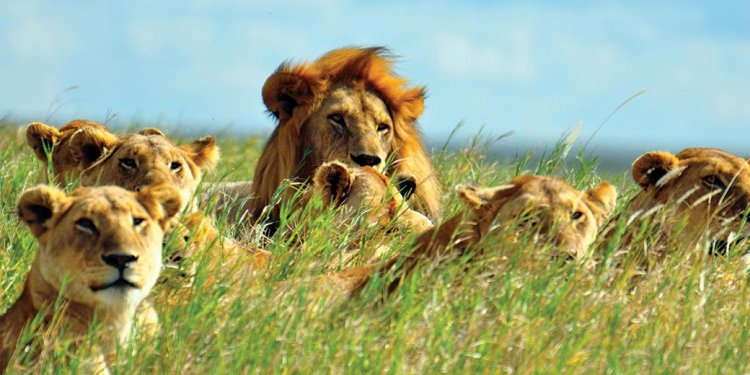 South Africa Trips Packages