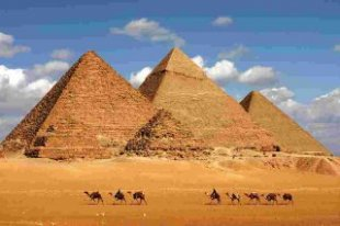 Camels walk-in desert ahead of the magnificent Pyramids of Giza, Cairo