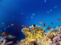 Colorful red coral reef, Red Sea, Egypt