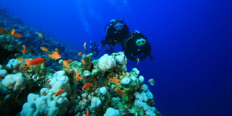 Egypt Scuba diving Holidays