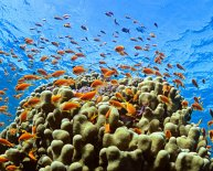 Diving Hurghada Egypt