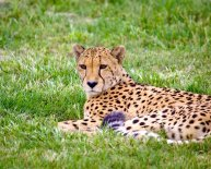 South Africa Package Tours